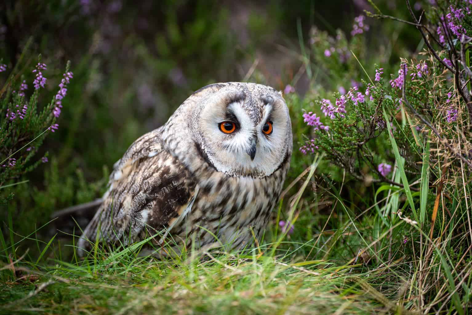 Owls In South Dakota