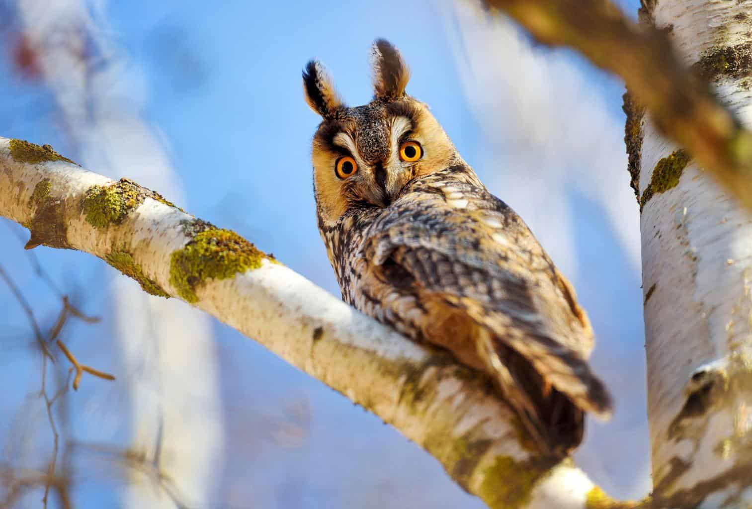 Owls In Texas