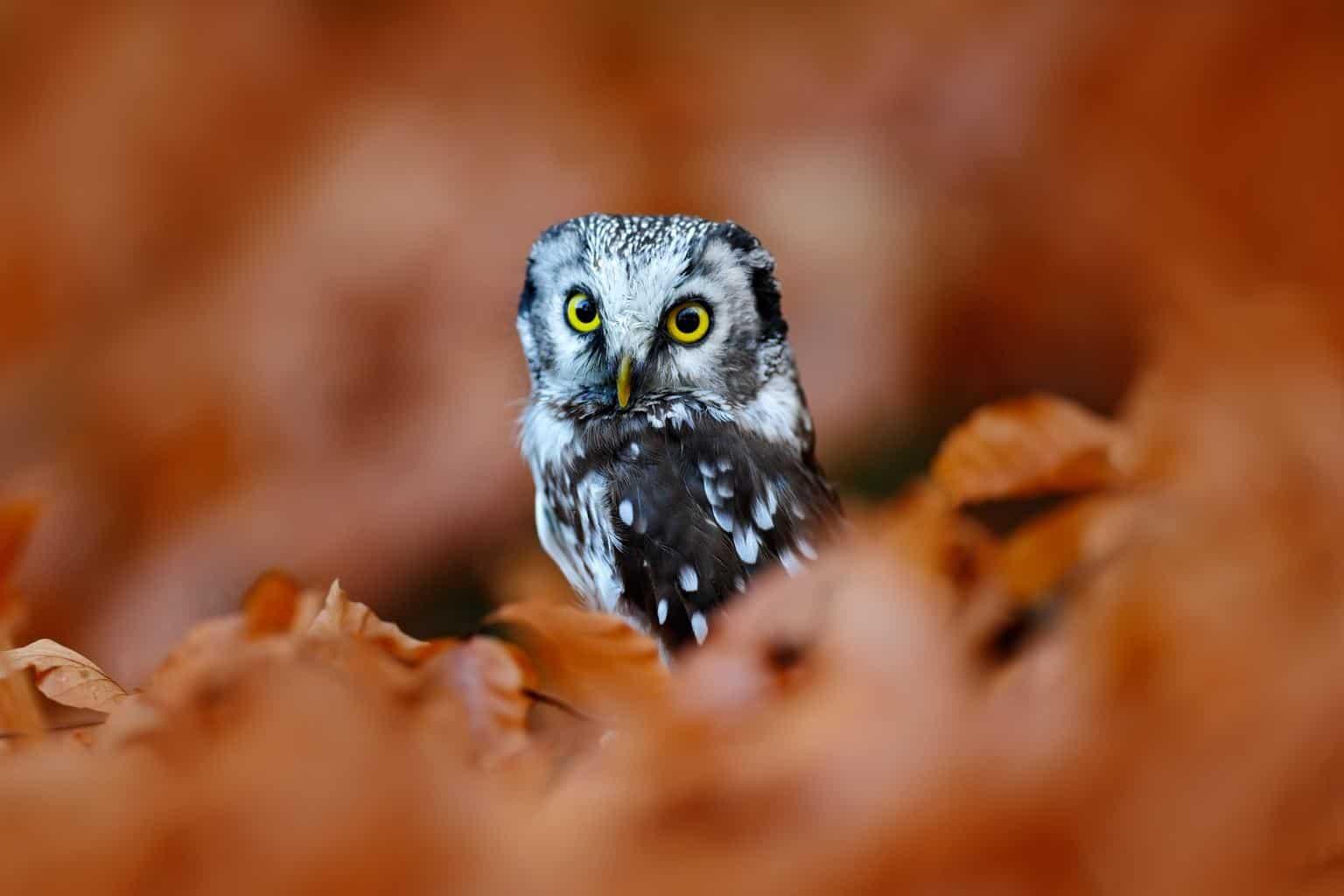 Owls In Utah