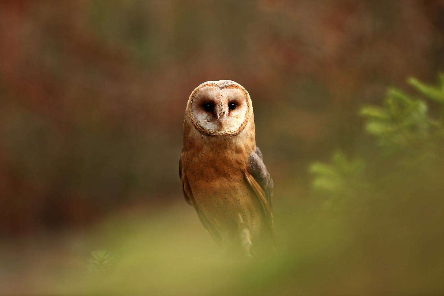 Owls In Virginia