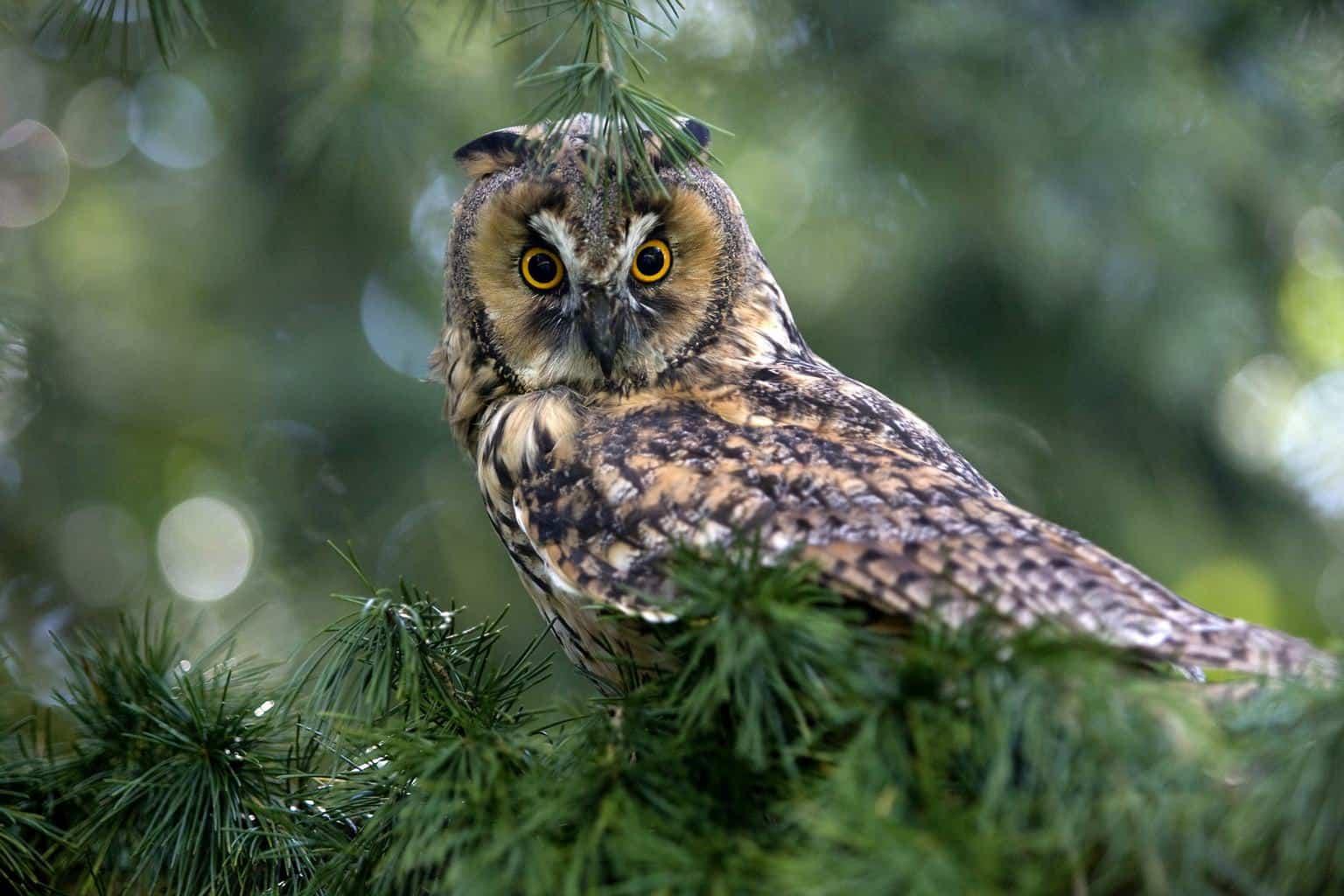 Owls In Washington