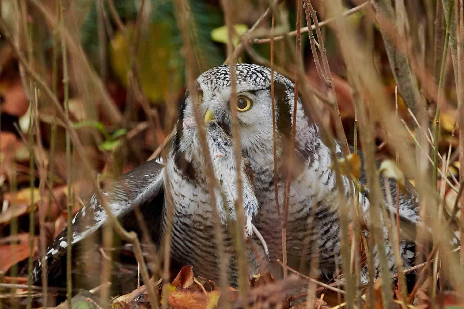 Owls In West Virginia