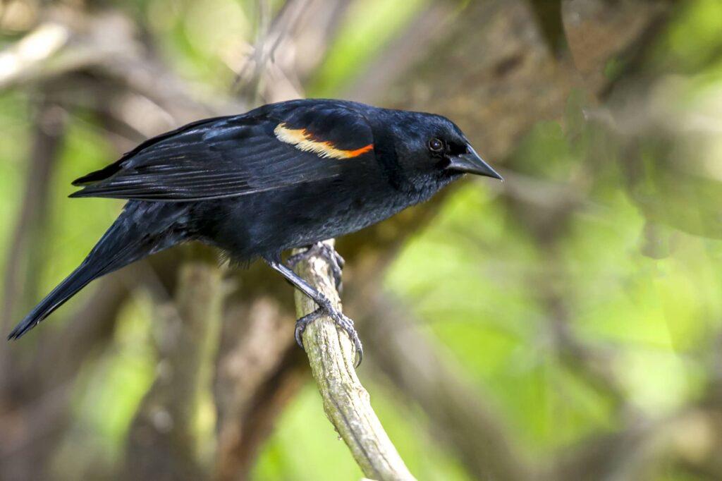 Birds In Mississippi