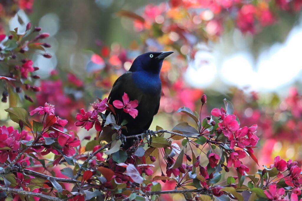 Birds In Nevada