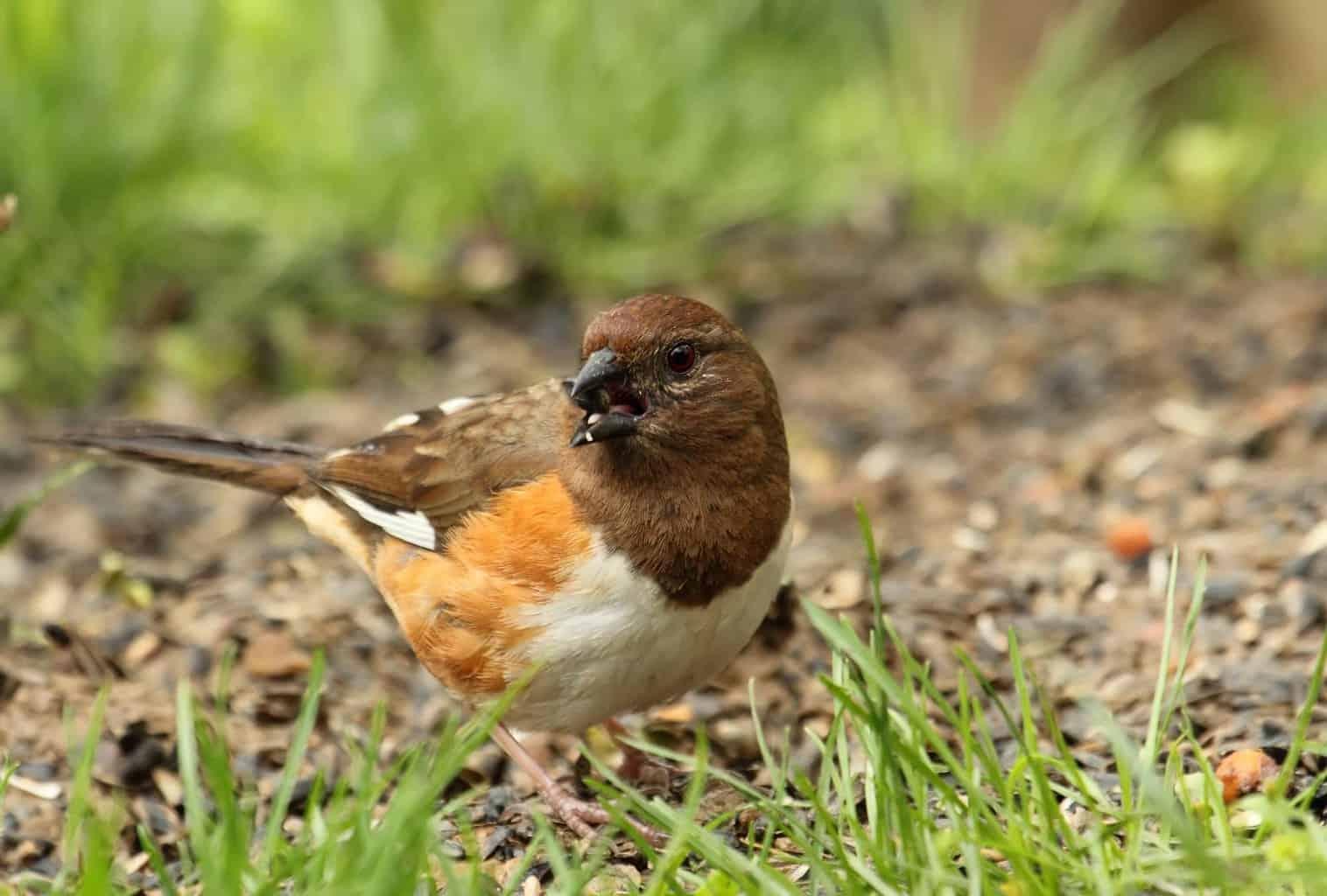 Birds In North Carolina