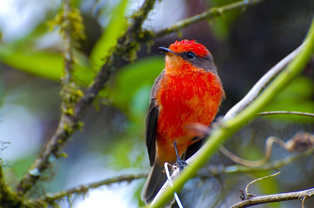 Birds In Oregon