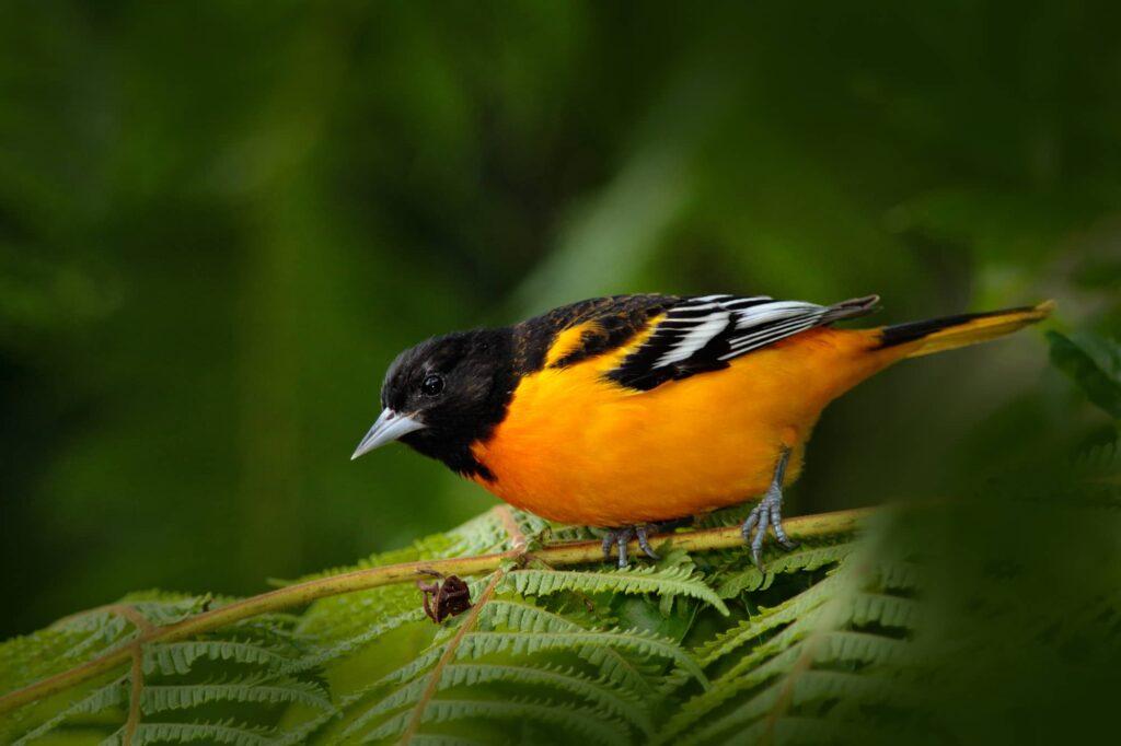 Birds In Pennsylvania